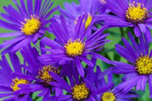 cor violeta para ambientes, como usar?